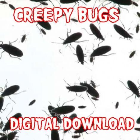 CREEPY BUGS DIGITAL DOWNLOAD